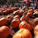 2011-10-30 Pumpkin