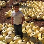 2011-10-30 Pumpkin2