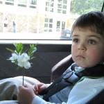 Flower 04_2012